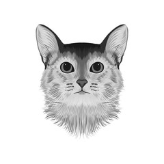 Abyssinian cat head avatar, black and white sketch drawing, hand drawn artwork, monochrome vector illustration.