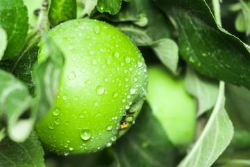fresh green Apple close-up