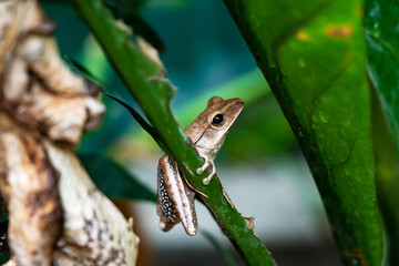 Tree frog on leaves