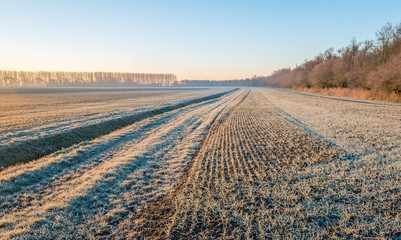 Dutch agricultural area with winter wheat sown in rows and a ditch on a cold winter morning