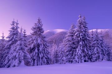 Wonderful winter scene in Carpathian Mountains. Pryslop Pass, Ukraine