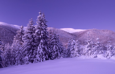 Beautiful winter landscape in Carpathian Mountains. National Park Synevyr