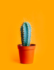 Fotobehang Cactus Green cactus in decor pot over bright orange pastel background. Colorful yellow summer trendy creative concept.