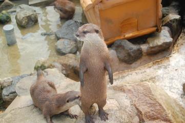 和歌山 アドベンチャーワールド 動物 動物園