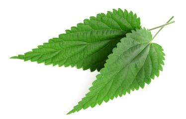 Papiers peints Graine, aromate nettle leaves