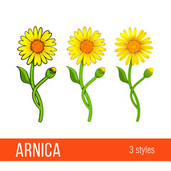 Arnica floral design element. Set of images with different styles - cartoon, semi realistic, with or without strokes. Flowers with leaves, buds and branches. Aromatherapy, herbal, medical ingredient
