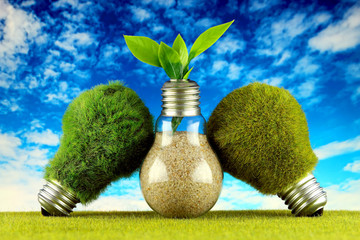 Green eco light bulbs with grass, plant growing inside the light bulb and blue sky background. Renewable energy concept.