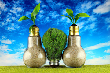 Green eco light bulb on the grass, plants growing inside the light bulbs and blue sky background. Renewable energy concept.