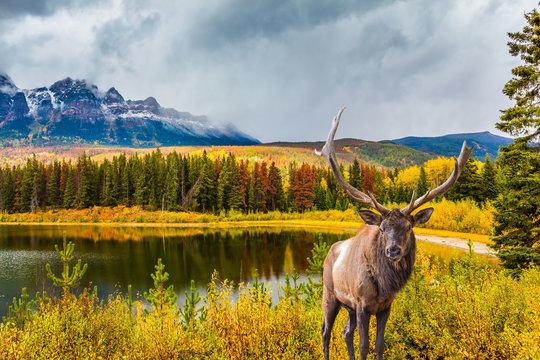 Gorgeous deer grazing