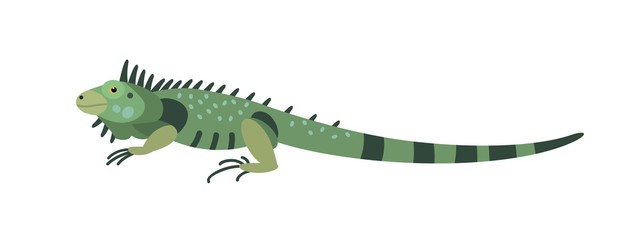 Green iguana isolated on white background. Gorgeous carnivorous exotic animal. Beautiful wild predatory reptile or lizard of South America. Colorful vector illustration in flat cartoon style. Wall mural