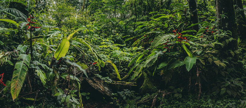 Central America Rainforest Jungle panorama, Costa Ricaa