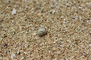 砂浜の生物