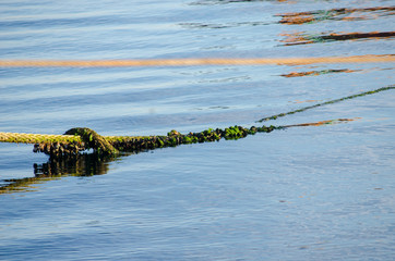 Old Mossy Rope in The Sea