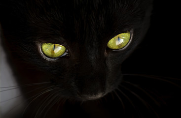 Face of a black cat with green eyes close-up. Selective focus. (shallow DOF)