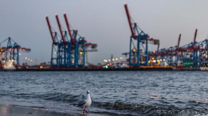 Am Elbstrand in Hamburg, Blick auf die Hafenkräne