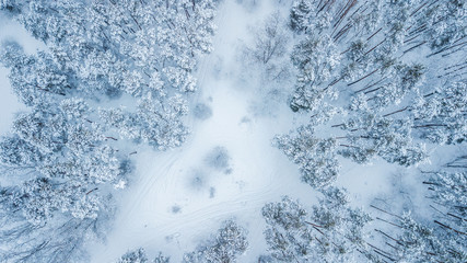 Aerial view of evergreen Christmass forest from above. drone shot. natural winter background