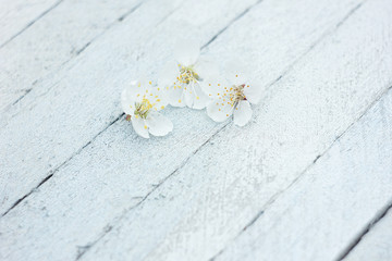 petals of cherry flowers on a light wooden background