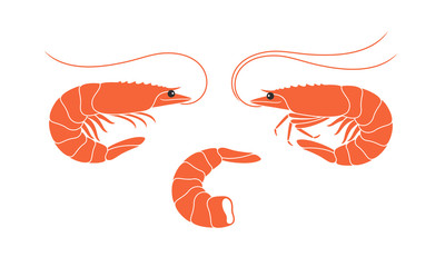 Shrimp set. Isolated shrimp on white background. Prawns