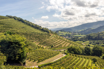 Foto auf Leinwand Weinberg Vineyards in the Basque country on a sunny day