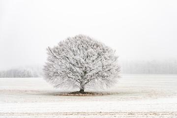 Fotorolgordijn Grijs wunderschöner Baum mit Schneereif einzeln auf dem Feld im Nebel