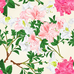 Seamless texture White and pink rhododendrons branches mountain shrub vintage vector botanical illustration hand draw