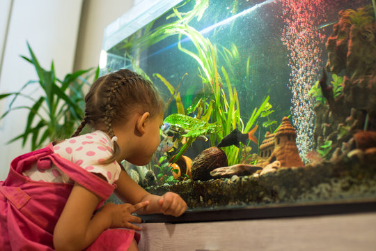 girl child looks at the fish in the aquarium