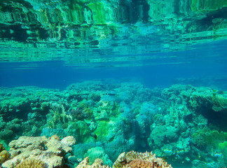 Underwater world with coral reef life, colorful corals, landscape