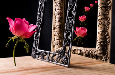 Single rose with a framed mirror creating a cascade of pink roses.