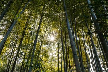 (自然風景)竹林風景9