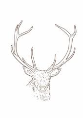 Drawing deer head