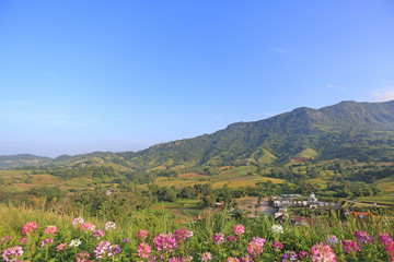 Beautiful landscape view of flower with blue sky mountain and village in Thailand.