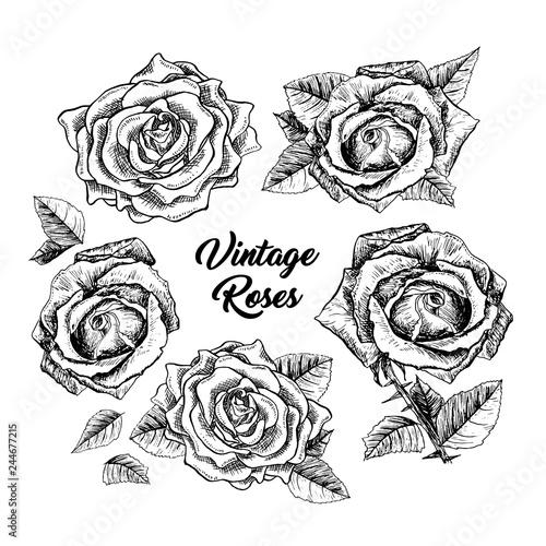 Roses hand drawn vector illustration  Black and white rosebuds ink