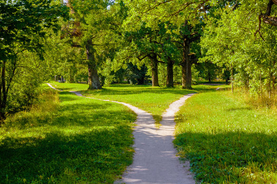 The wide pedestrian track in the park is divided into two, dispersing in different directions