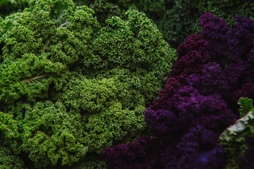 close up on Kale. green and purple  vegetable leaves, healthy eating, vegetarian food.