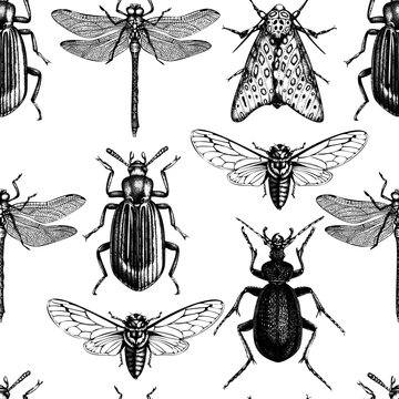 Vector background with high detailed insects illustrations. Hand drawn butterflies, beetles, cicada and dragonfly sketches . Vintage seamless pattern.