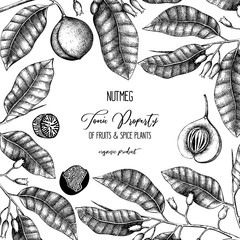 Botanical illustration of nutmeg tree on chalkborad. Vector design with  hand drawn spice plant sketch. Vintage template with aromatic and tonic elements