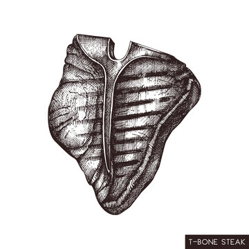 T-bone steak hand drawn illustration. Vector grilled beef drawing on white background. Fresh meat product sketch for restaurant menu design.