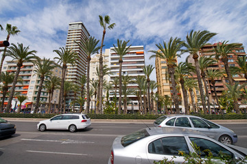 Modern residential block buildings behind traditional local breed of palm trees in the center of Alicante, Spain.