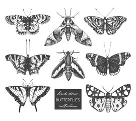 Vector collection of high detailed insects sketches. Hand drawn butterflies illustrations on white background. Vintage entomological drawings.