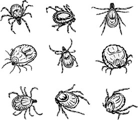 mite, image variants in various forms, color, black