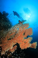 Scuba dive over coral reef