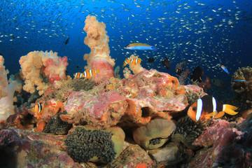 Clown Anemonefish fish