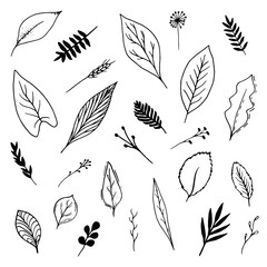 Isolated botanical vector set. Hand drawn lineart and solid leaves illustrations collection, black on white background