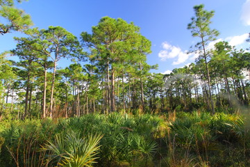 Oxbow Eco-center, Fort Pierce, Florida
