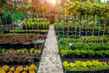 Garden shop. A row of plants for landscape design