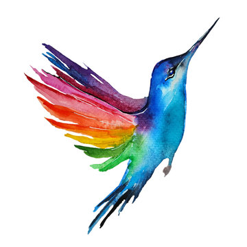 Watercolor blue bird with colorful wings. Multicoloring hummingbird isolated on white background. Hand painted colibri illustration.