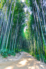 Bamboo forest in Damyang, South Korea