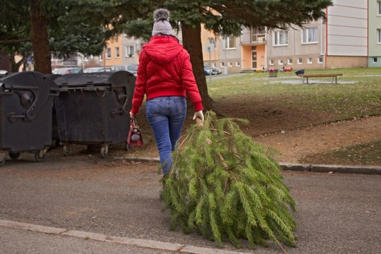 Christmas is over.A woman with a red handbag and a jacket carries a pine tree to the container. The garbage trucks will take her later.
