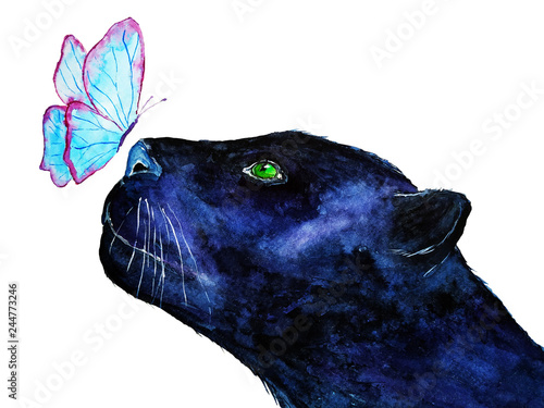 Hand painted wild black jaguar watercolor illustration. Watercolor black  panther and blue butterfly isolated on white background. 2230114cd