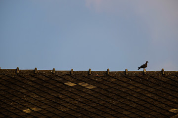 Bird on the roof.